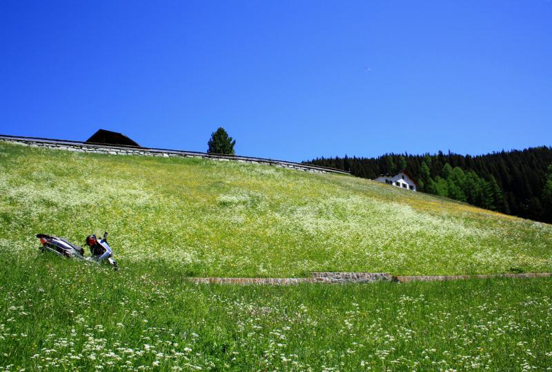 Wiesen und Blumenmeer im Sertigtal