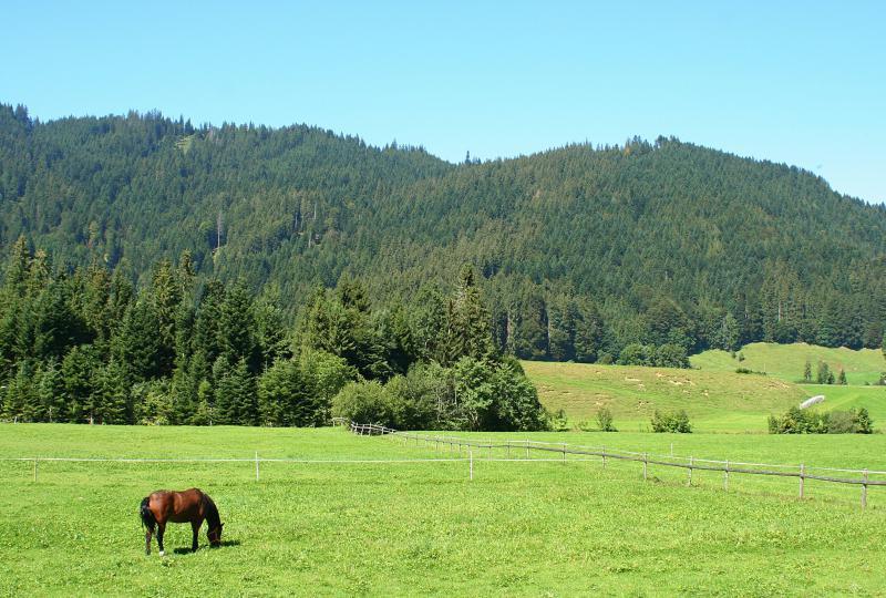 Pferde-Idylle bei Alpthal Richtung Einsiedeln