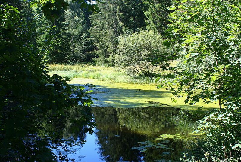 Naturschutzgebiet oberhalb des Ratenpass
