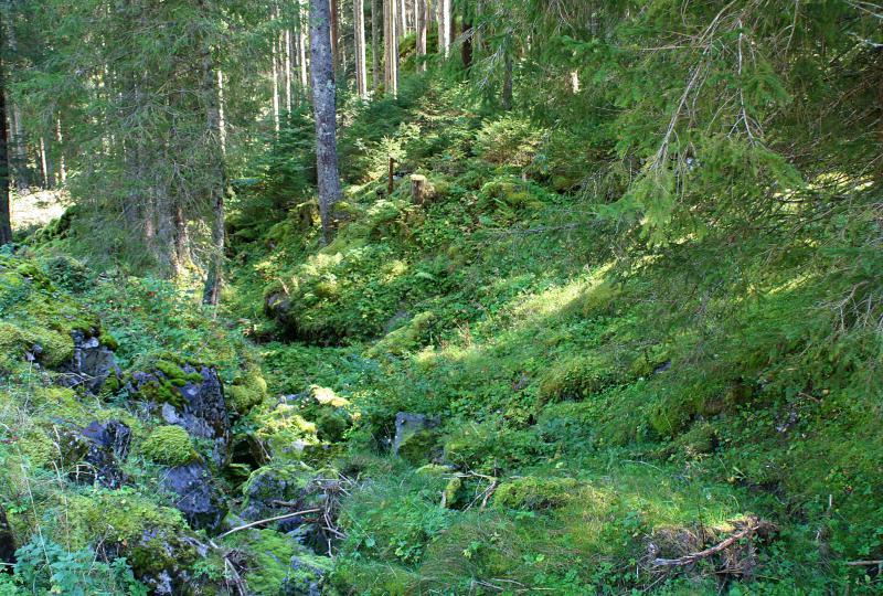 High moor on the Voralp near the Voralp Lake