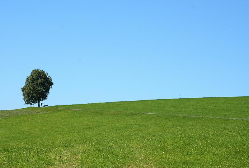 Single tree on the Ratenpass